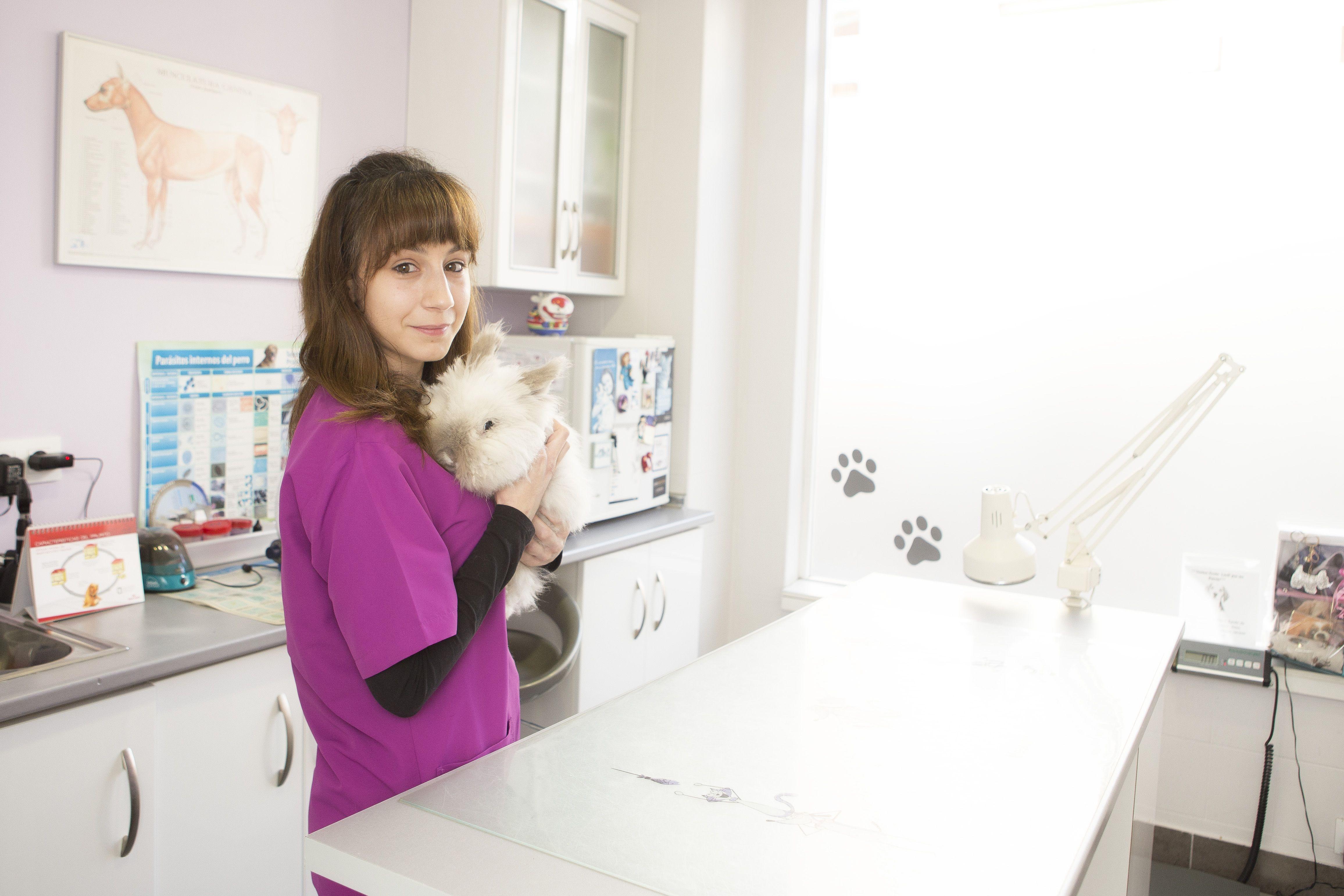 Veterinarios gatos en Oviedo