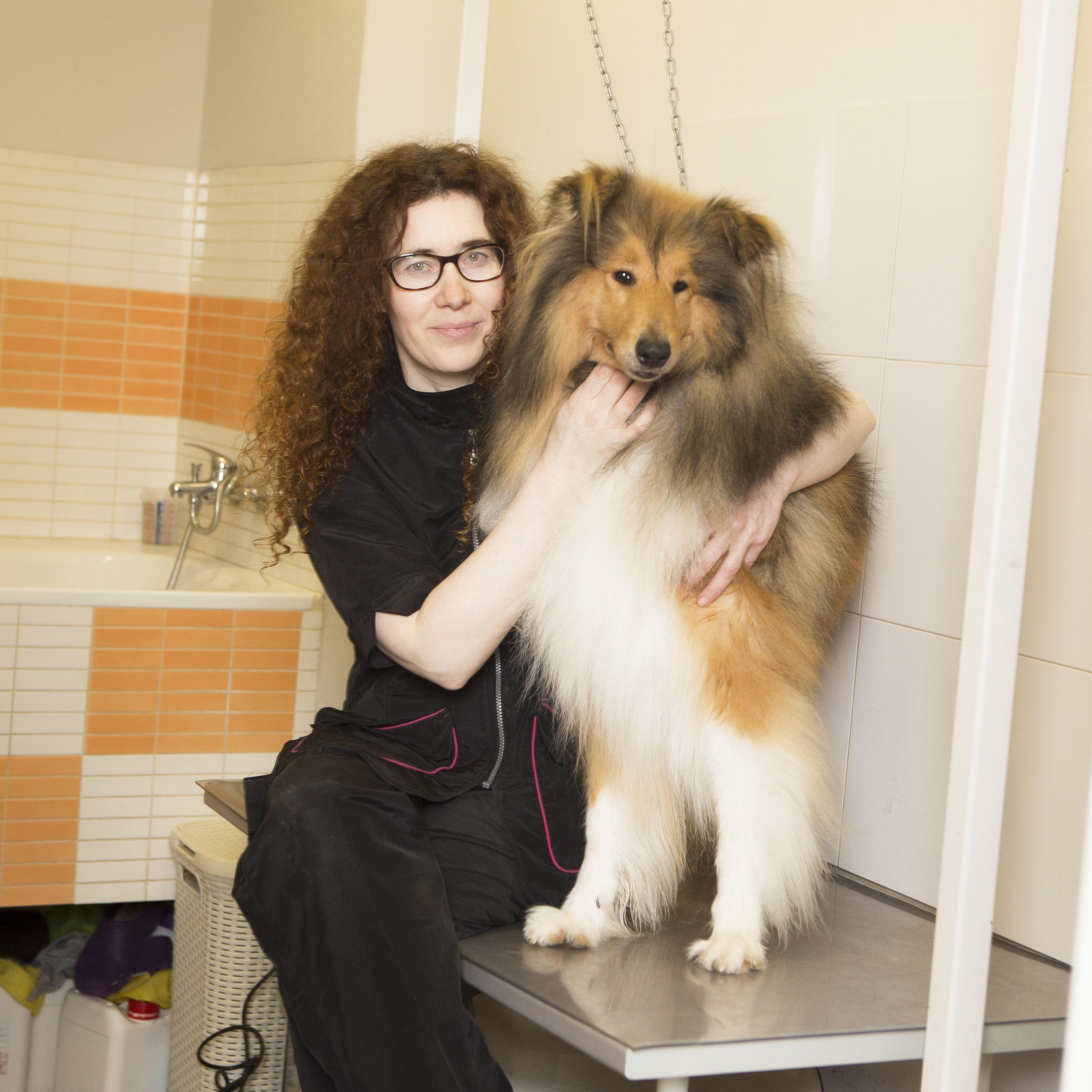 Vacunación de perros en Oviedo