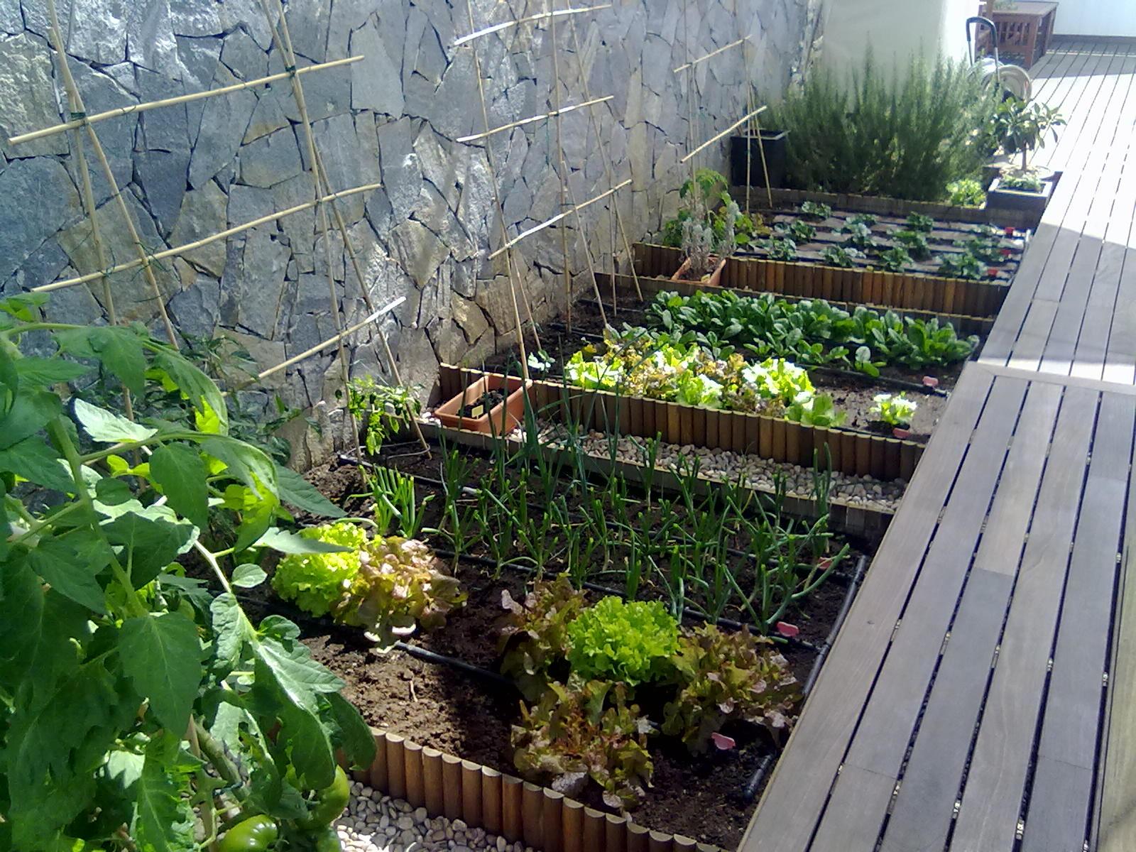 Foto 26 de Jardines (diseño y mantenimiento) en Santa Cruz de Tenerife | GT Verde