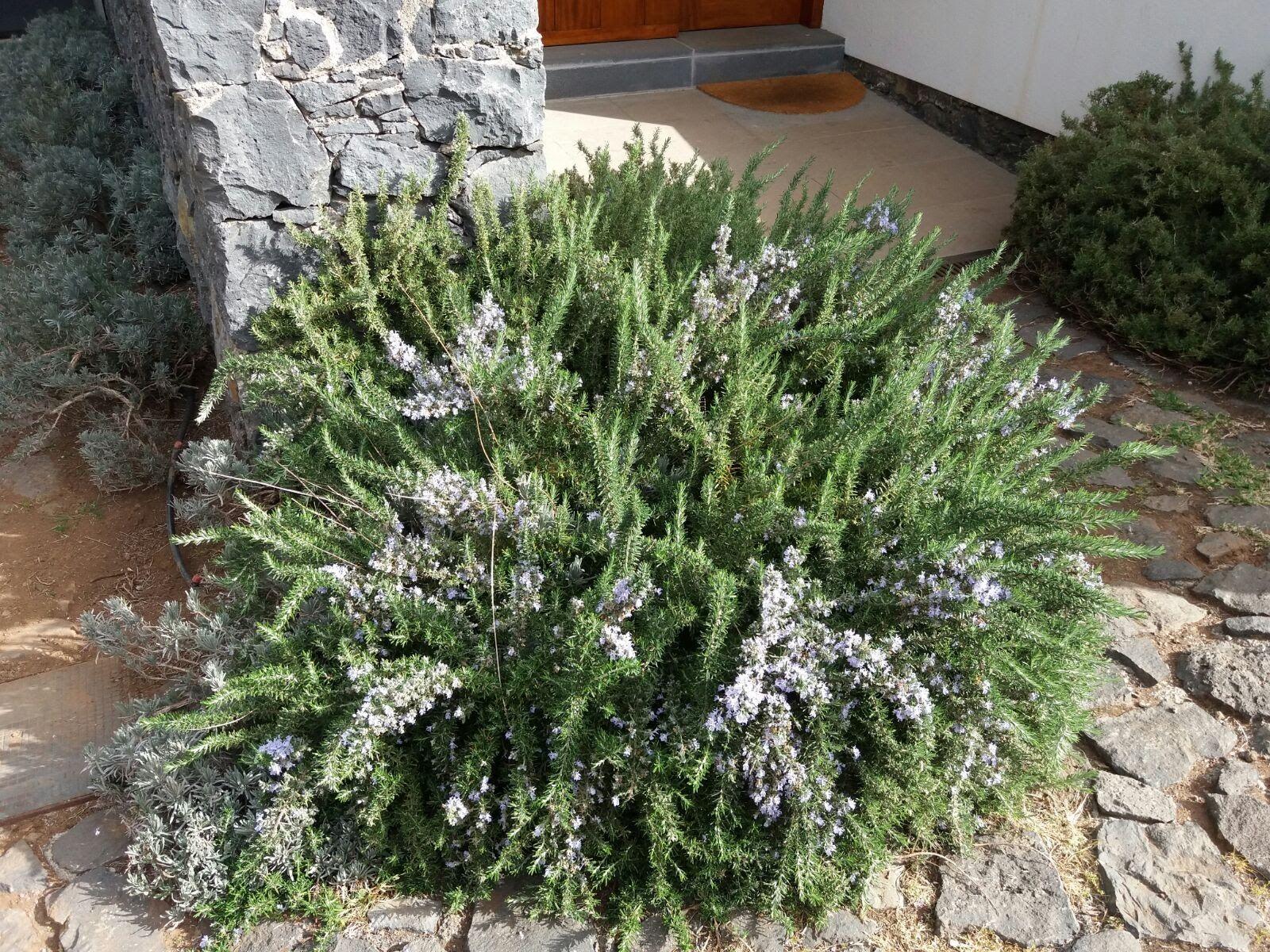 Jardinería y paisajismo en Tenerife