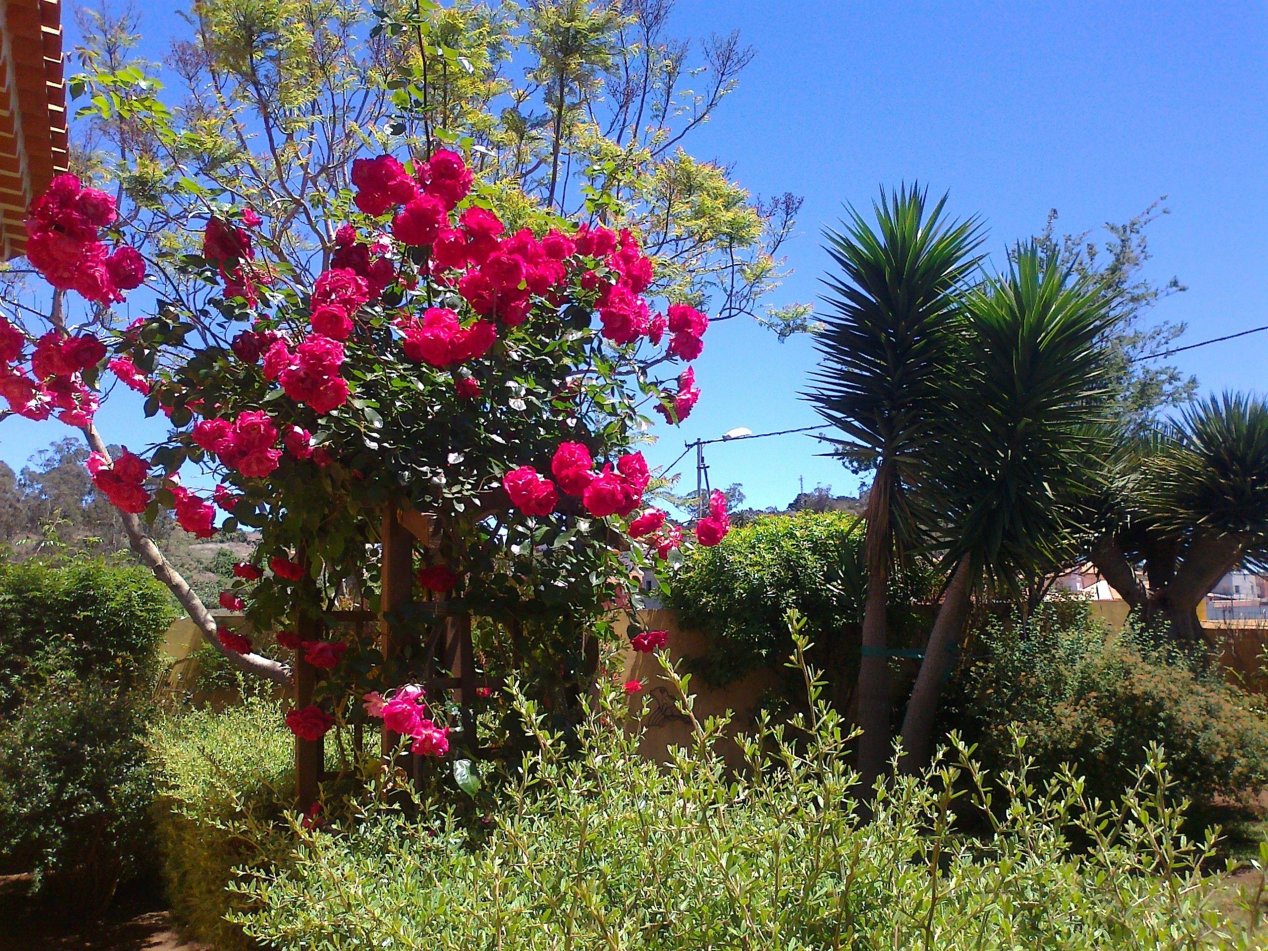 Foto 38 de Jardines (diseño y mantenimiento) en Santa Cruz de Tenerife | GT Verde