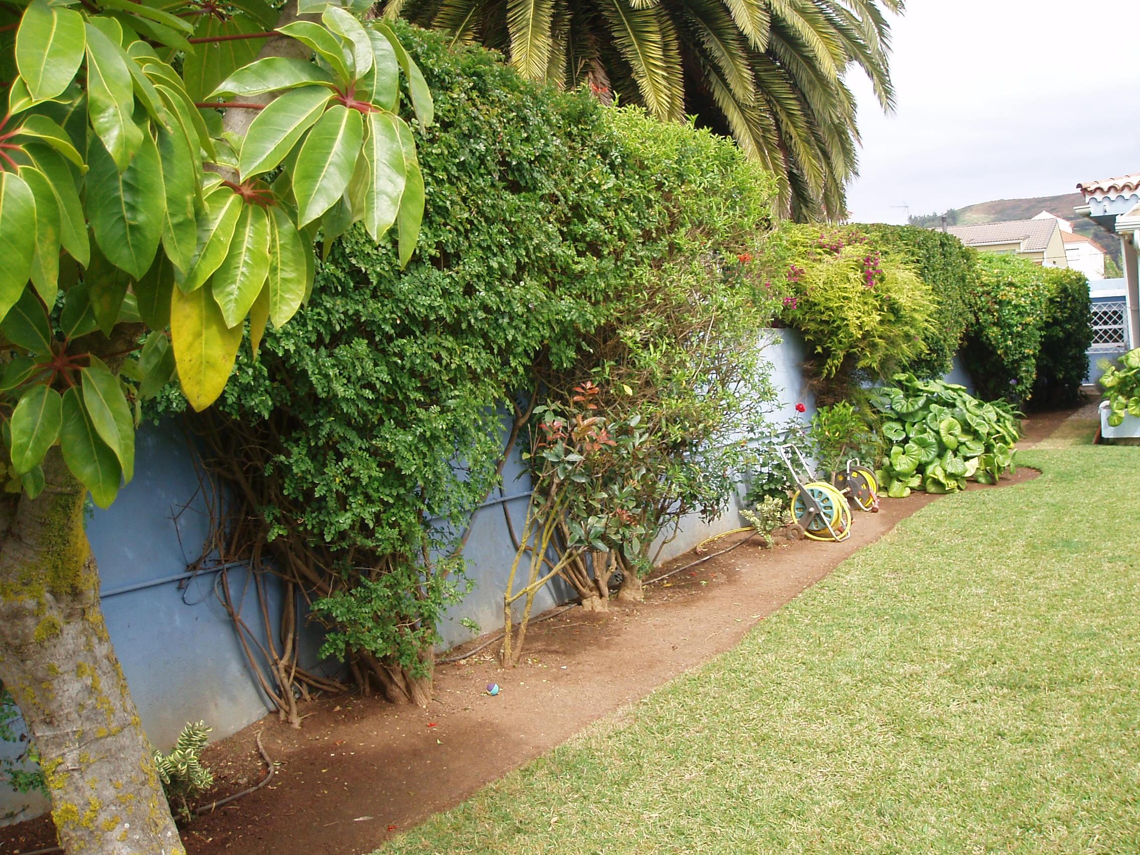 Foto 36 de Jardines (diseño y mantenimiento) en Santa Cruz de Tenerife | GT Verde