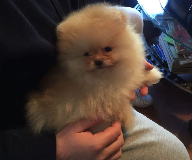 Nuestro cachorro