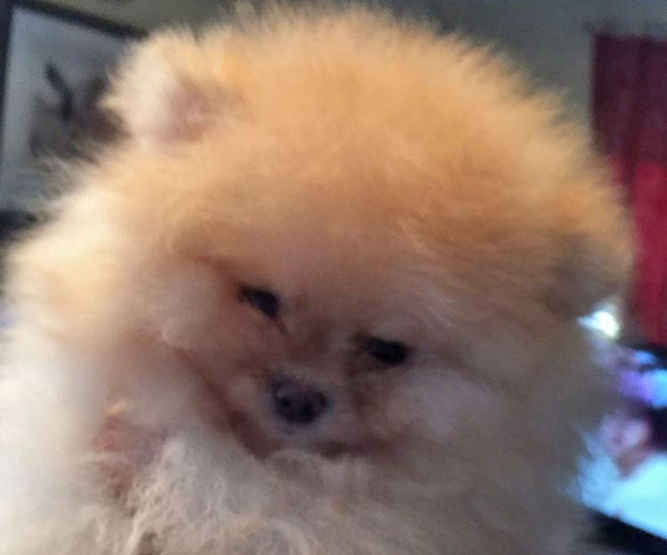 Criadero de perros con pedigree