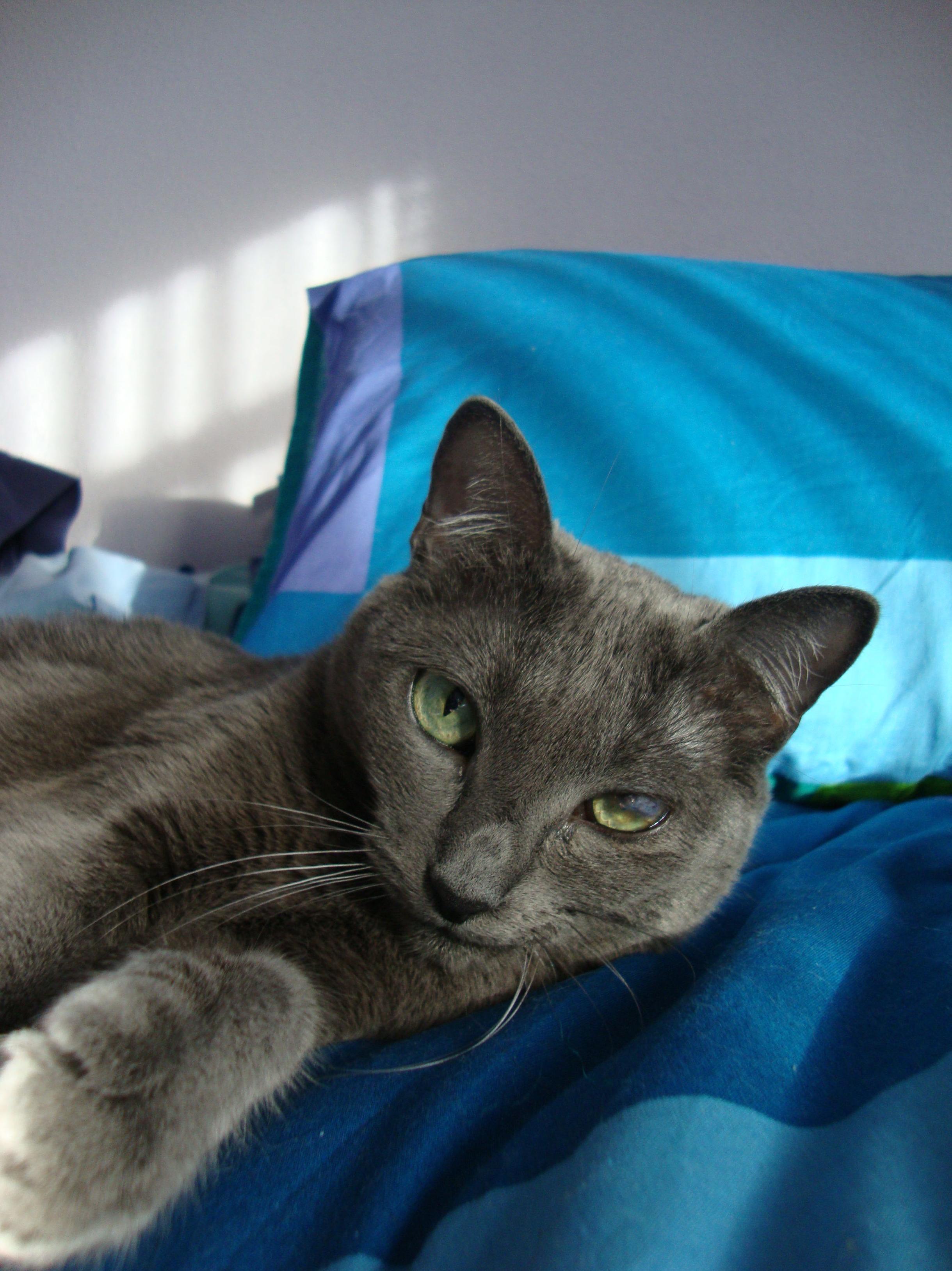 veterinario de gatos en leganés