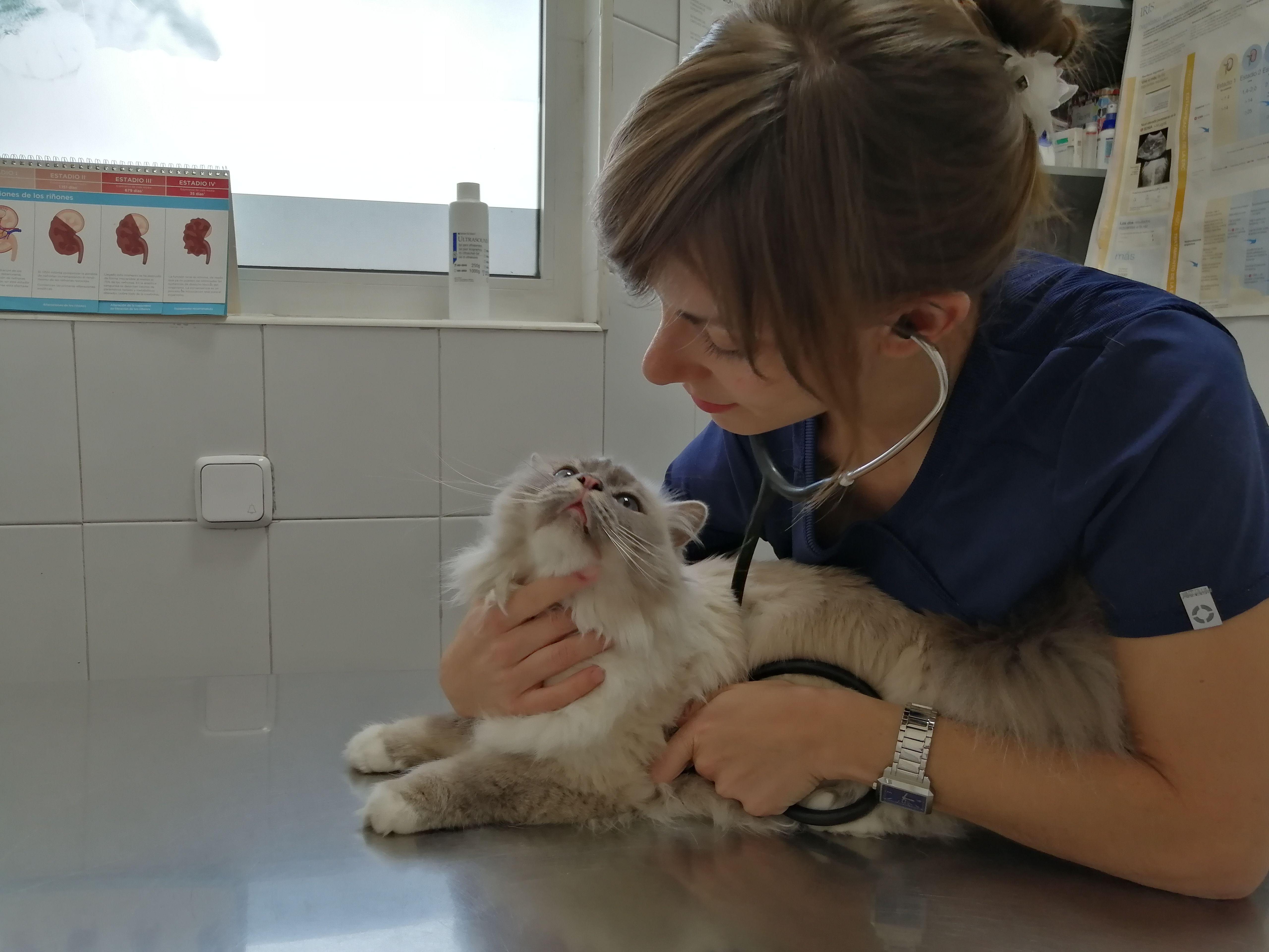 Atención Especial: Servicios veterinarios de Clínica Veterinaria Leganés Norte