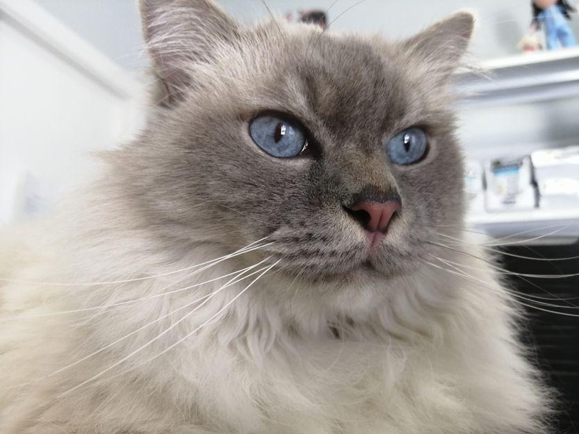 Centro veterinario para gatos en Leganés