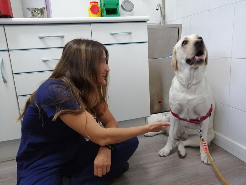 Centro veterinario para perros en Leganés