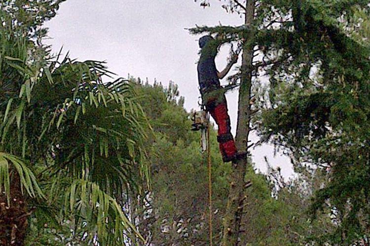 Especialistas en poda de árboles en Barcelona