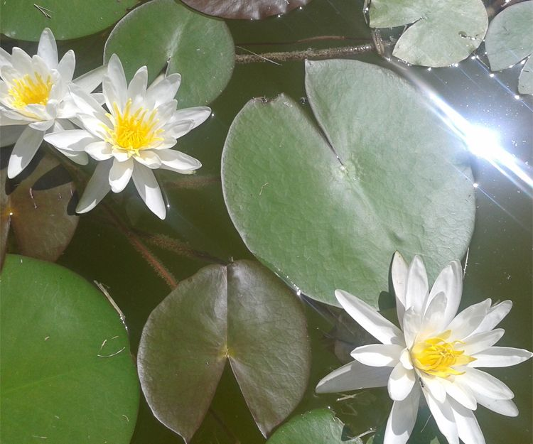 Salud y bienestar con la naturaleza