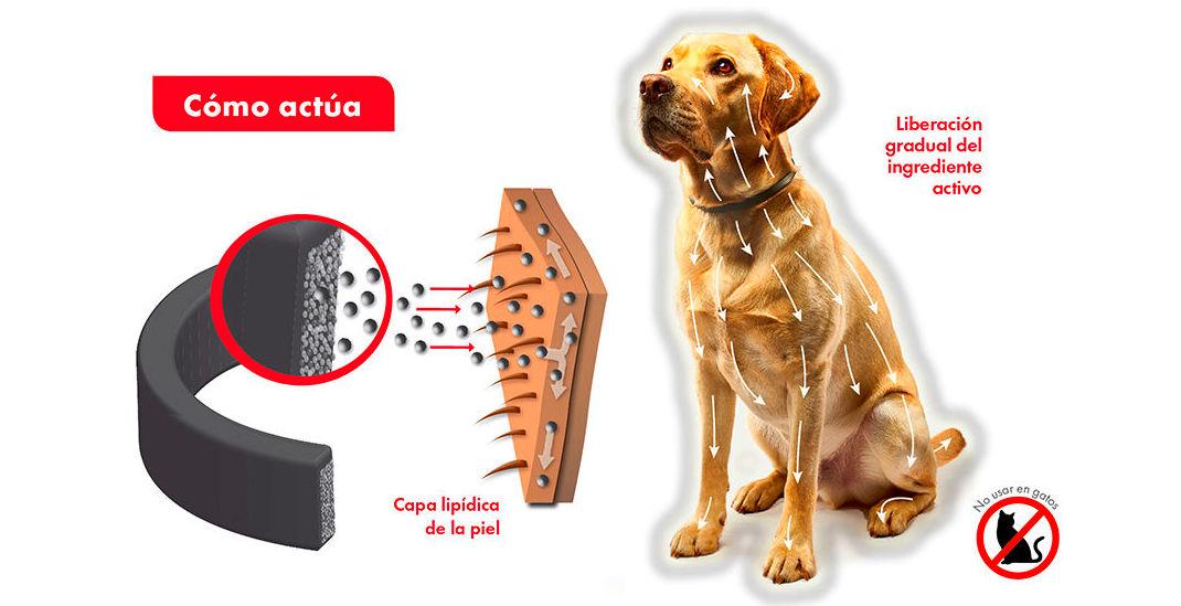Foto 6 de Centro veterinario en    JORDI / DAVINIA
