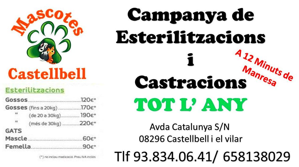 CAMPAÑA CASTRACIONES Y ESTERILIZACIONES EN MASCOTES CASTELLBELL
