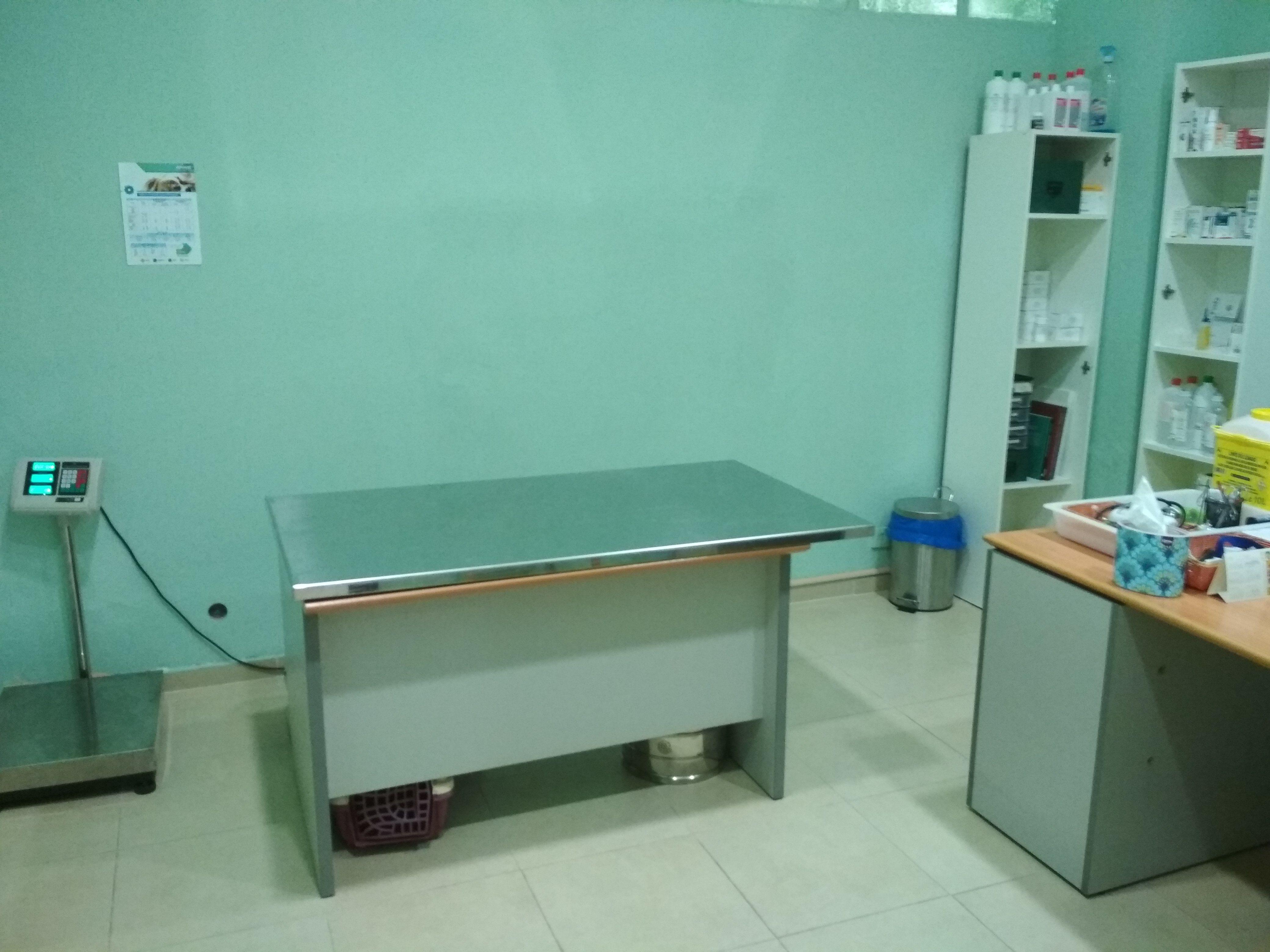 Consulta veterinaria en Castellbell y Vilar