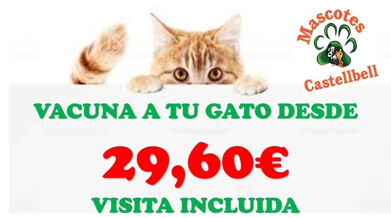 Vacuna a tu Gat@ desde 29,60€: Productos y servicios de JORDI / DAVINIA
