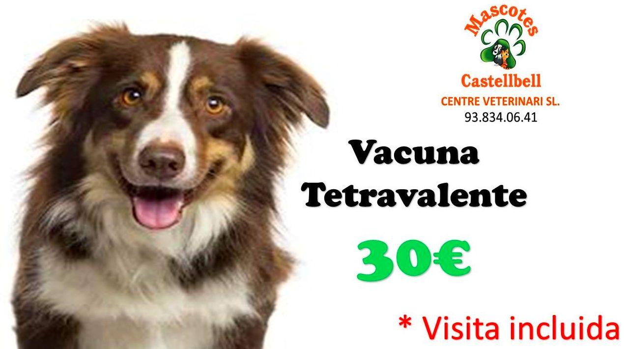 Vacuna Tetravalente en Mascotes Castellbell centre Veterinari S.L: Productos y servicios de JORDI / DAVINIA