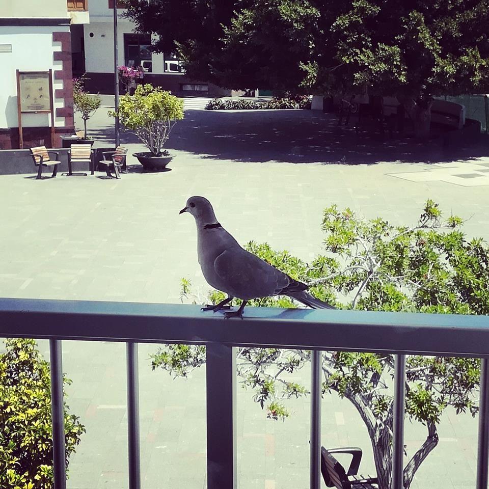Foto 12 de Hostales en Playa de Santiago | La Gaviota