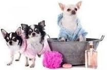 Contamos con estilistas caninos especializados en las diferentes razas