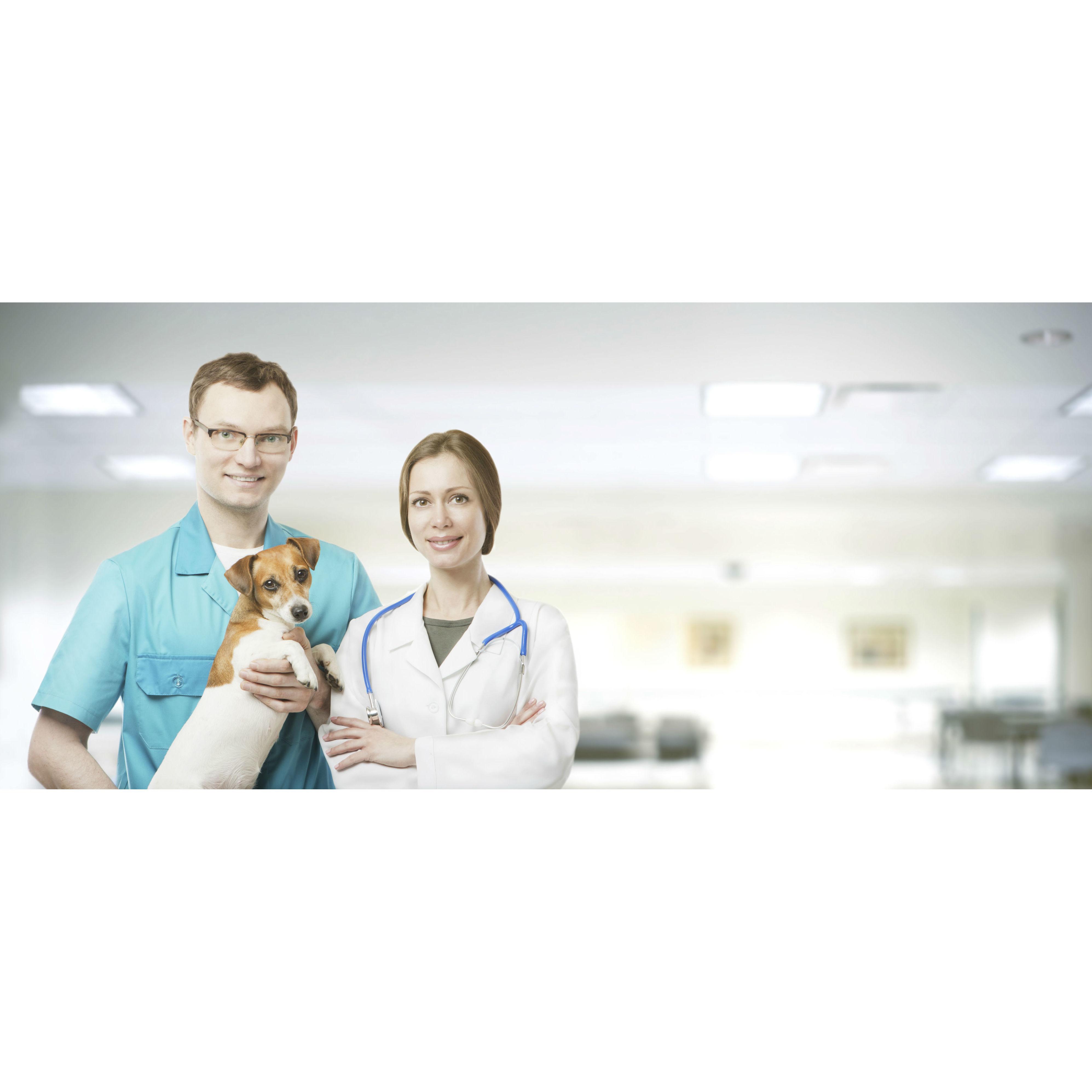 Cirugía: Servicios de Species Veterinaria