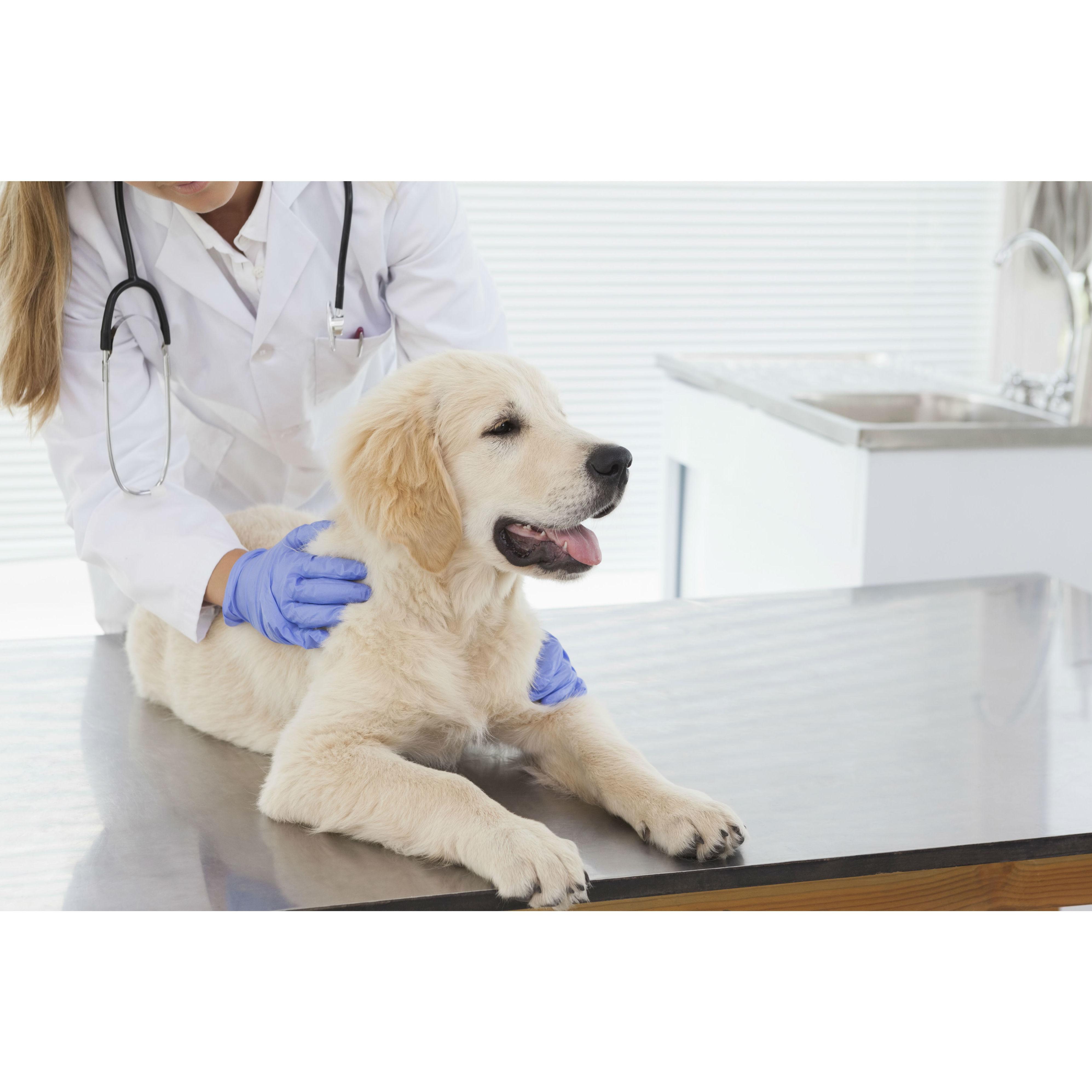 Hospitalización: Servicios de Species Veterinaria