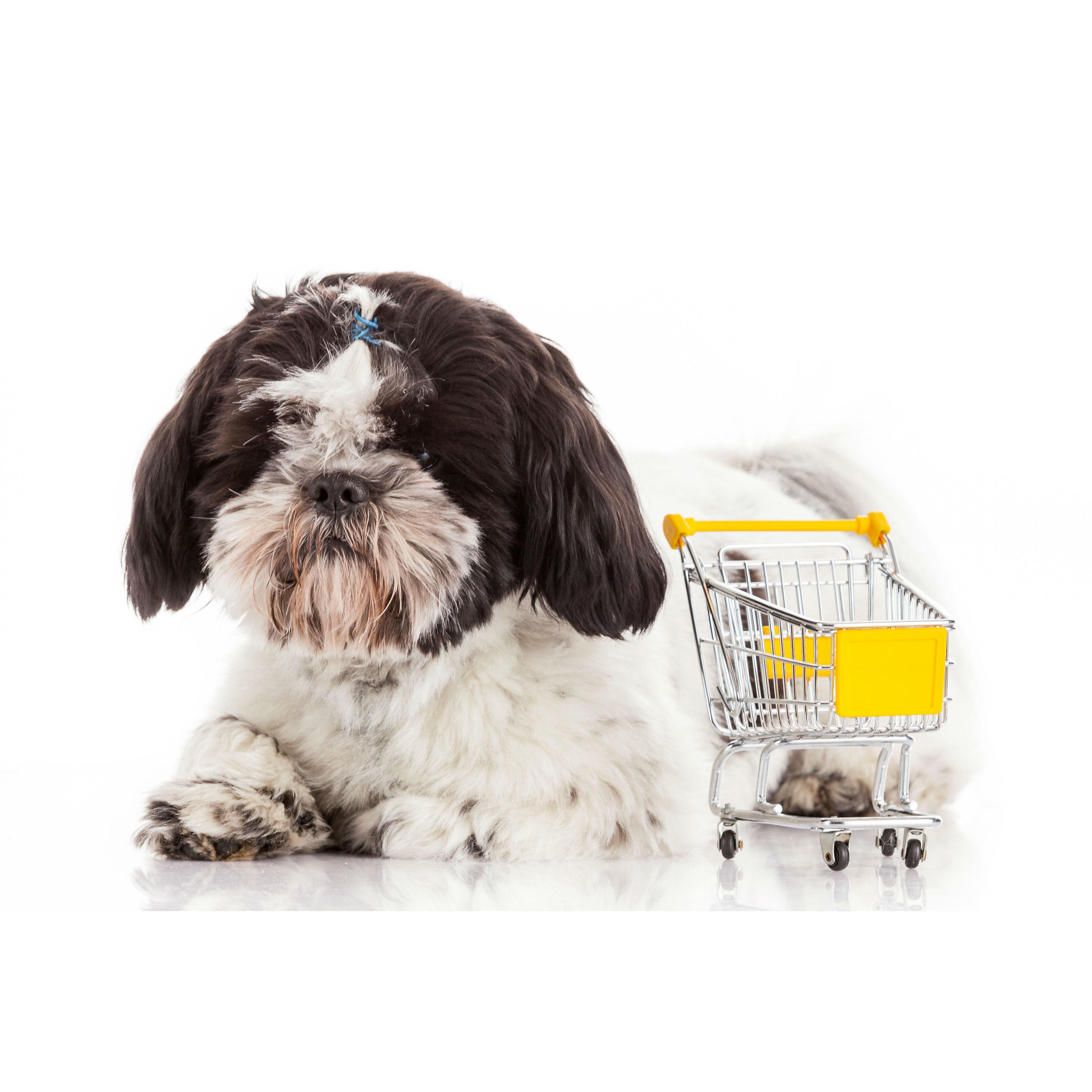 Pienso para mascotas: Servicios de Species Veterinaria