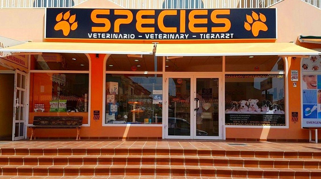 Foto 7 de Veterinarios en La Caleta | Species Veterinaria