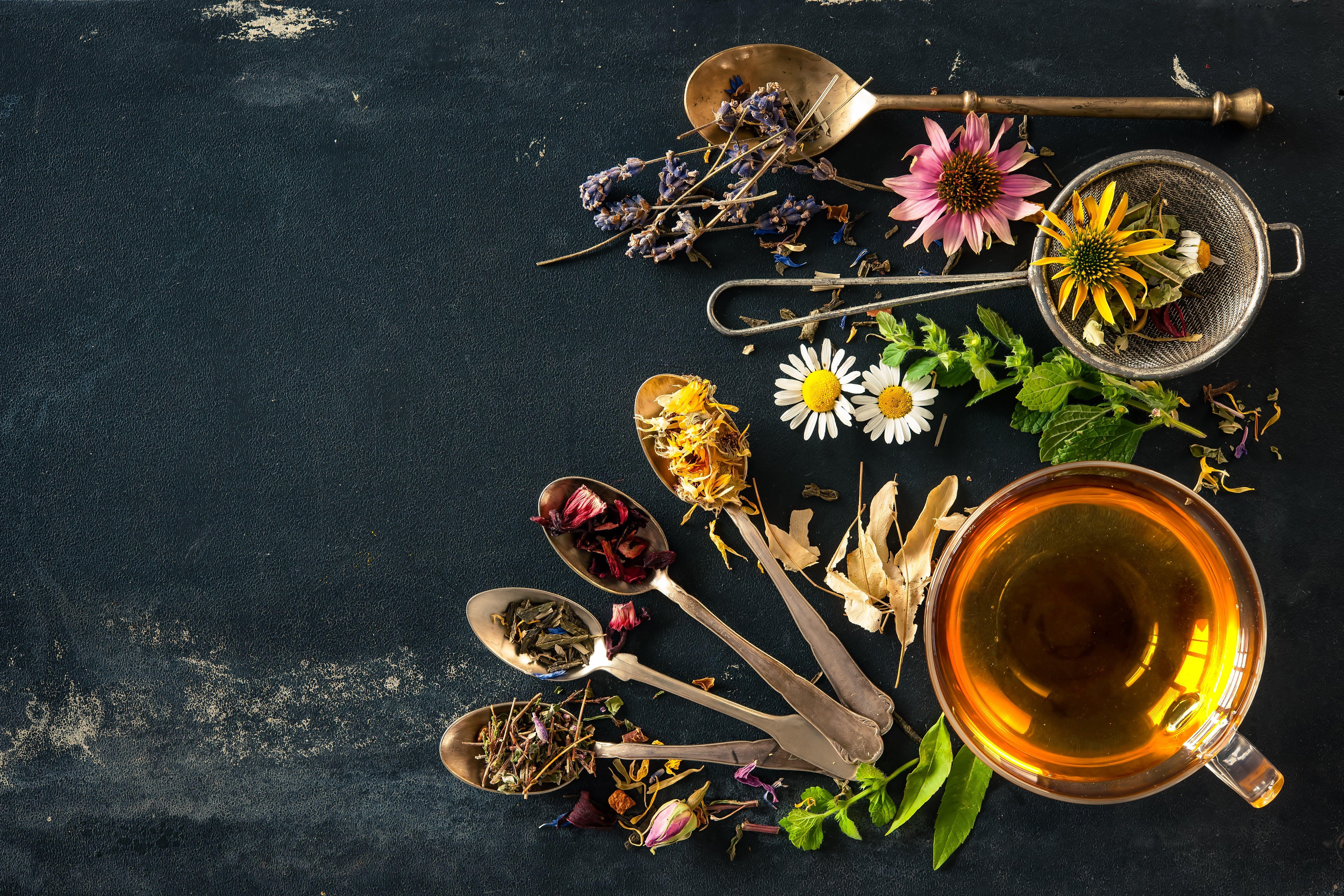 Usamos plantas medicinales beneficiosas