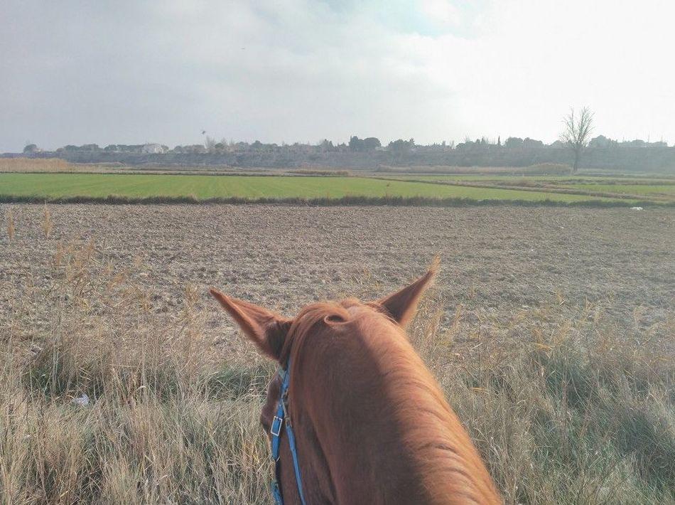 Paseos a caballo en un entorno natural