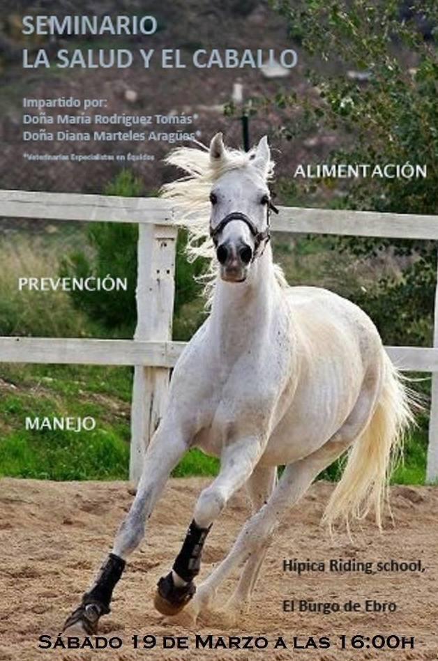 Cursos y clinics: Servicios de Hípica Riding School