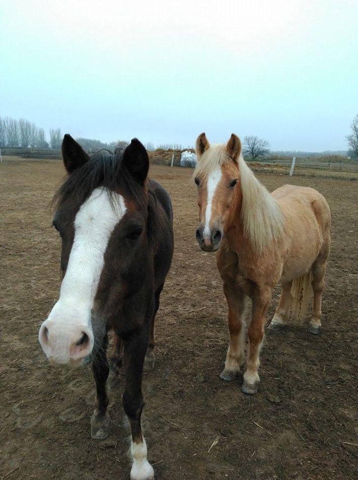 Diferentes ponis en nuestra hípica