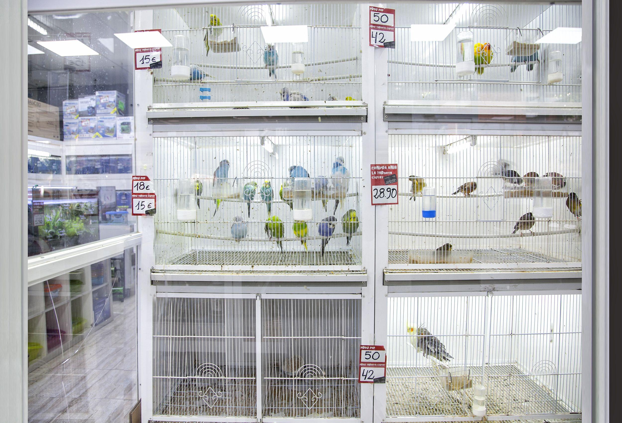 Tienda de animales en Cerdanyola del Vallès