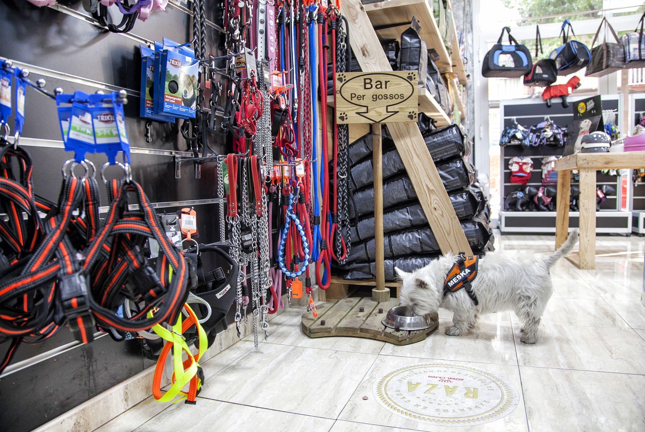 Accesorios para mascotas en Badalona