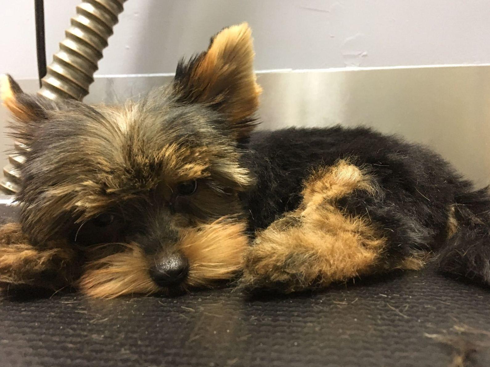 Peluquería canina: Productos y servicios de Més Que Gossos