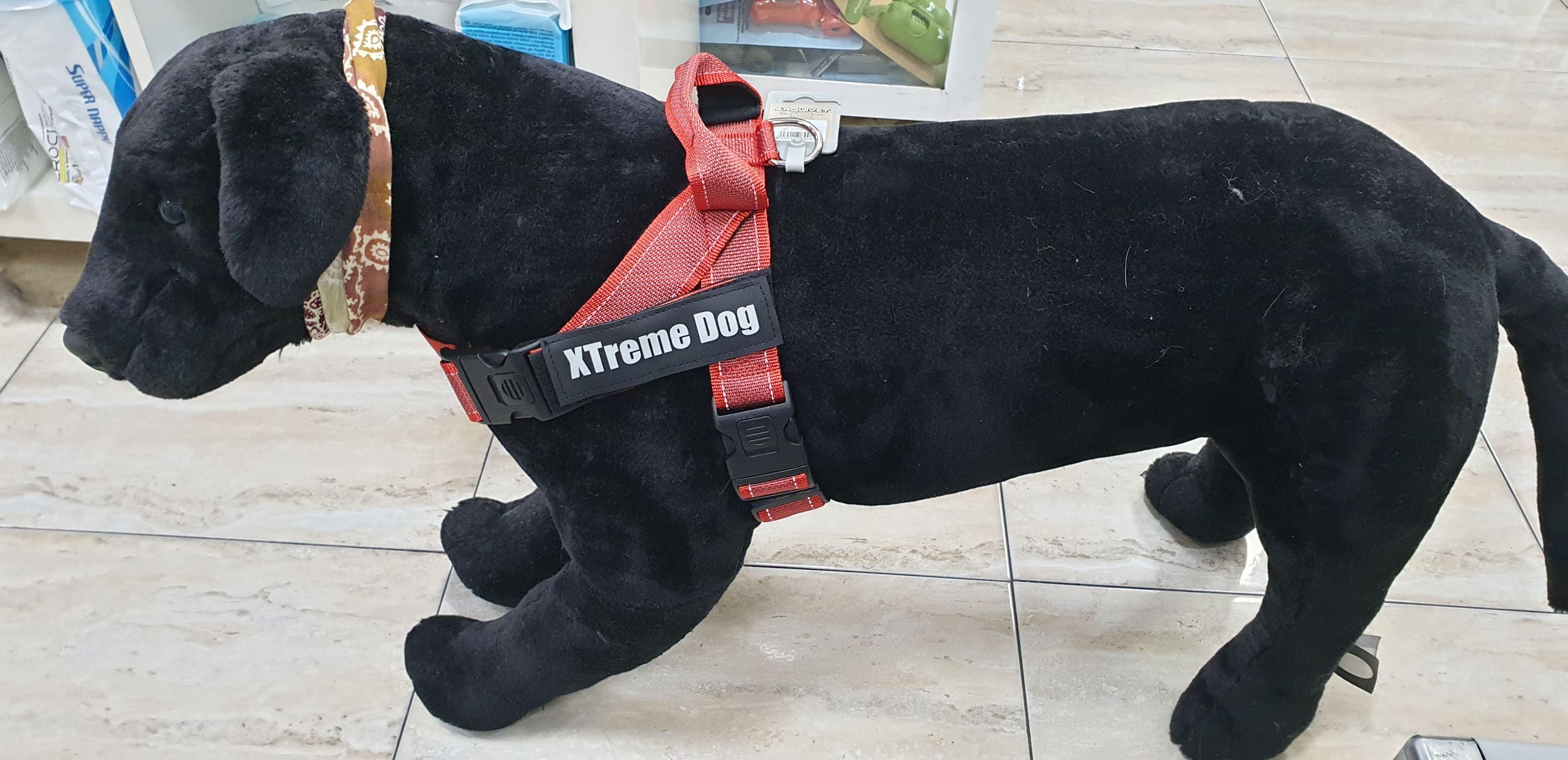 Arnes XTREME DOG : Productos y servicios de Més Que Gossos
