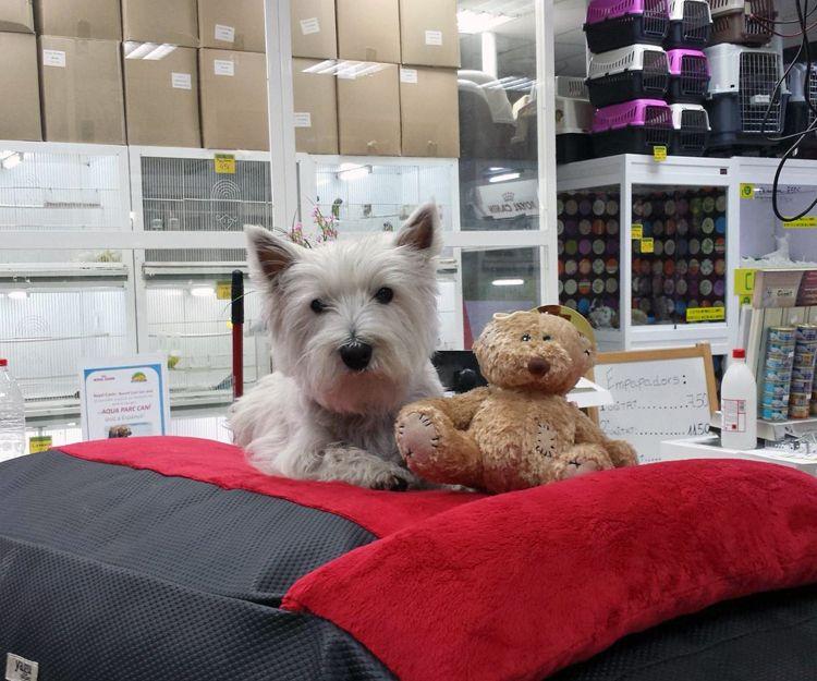 Tienda de mascotas en Santa Coloma de Gramanet