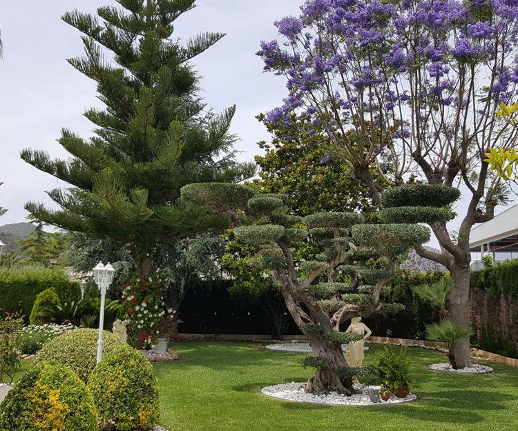 Servicio de jardinería en Valencia
