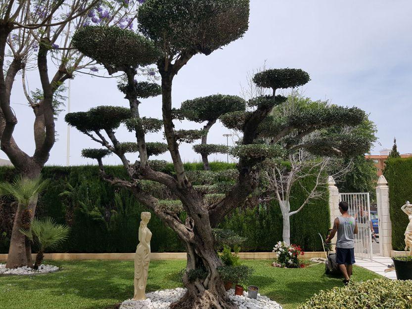 Poda de árboles en Gandía