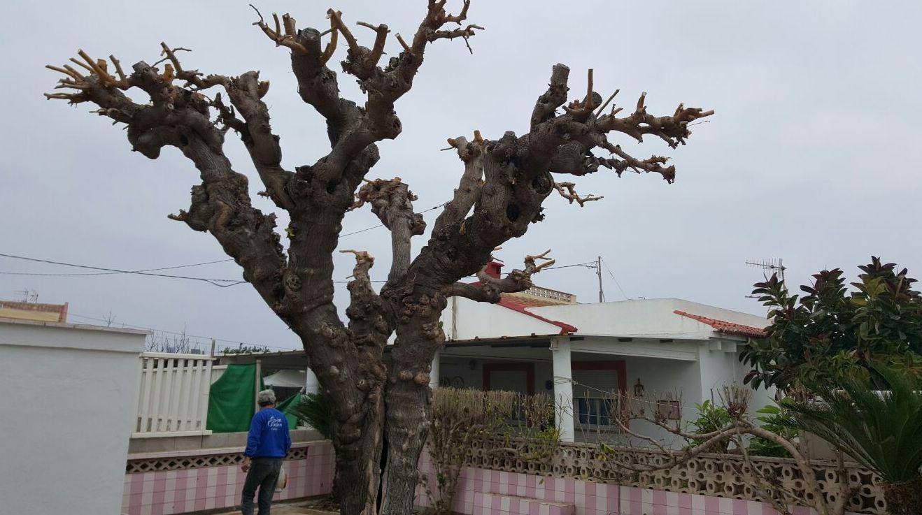 Poda de árboles en Valencia