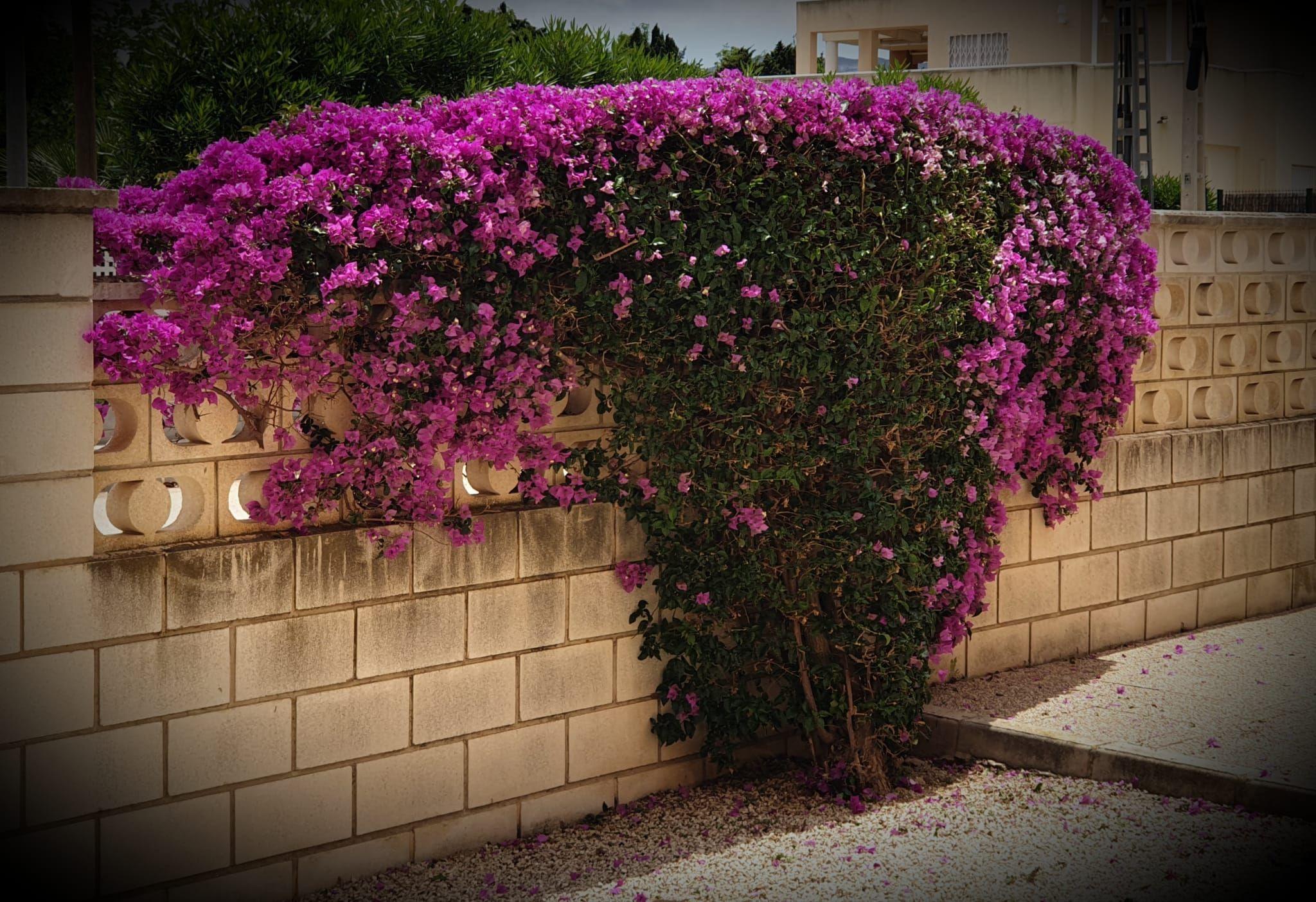 Empresas de jardinería en Gandía