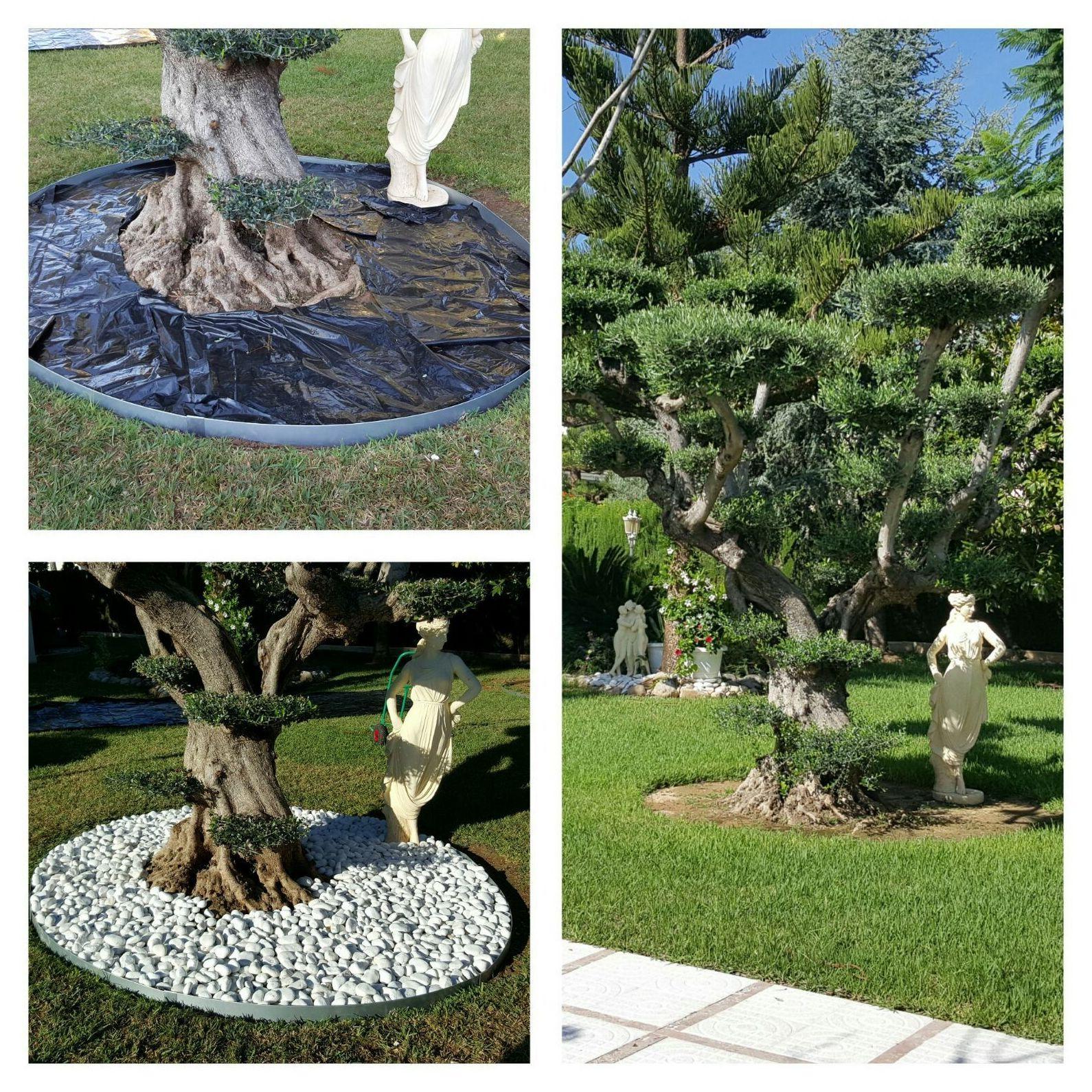 Decoración de jardines Gandía