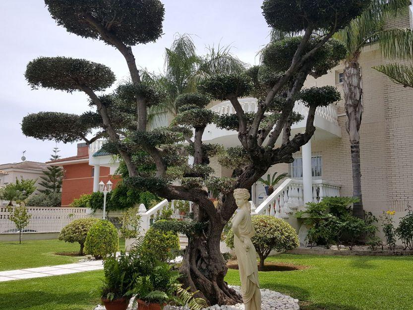 Mantenimiento de jardines en Gandía
