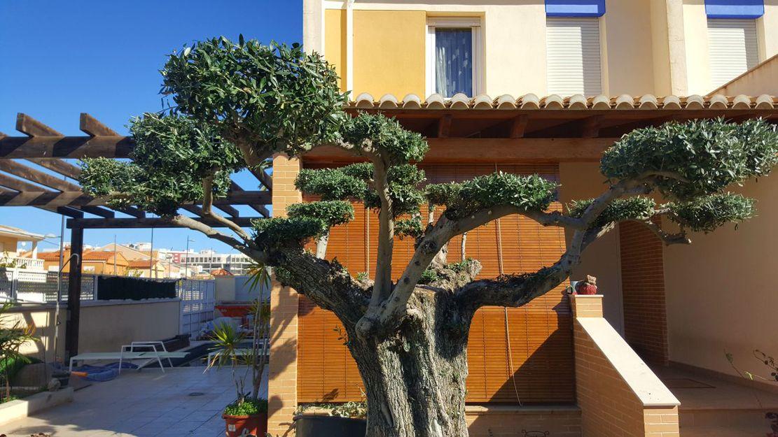 Foto 89 de Jardinería en Daimús | Grun Garden