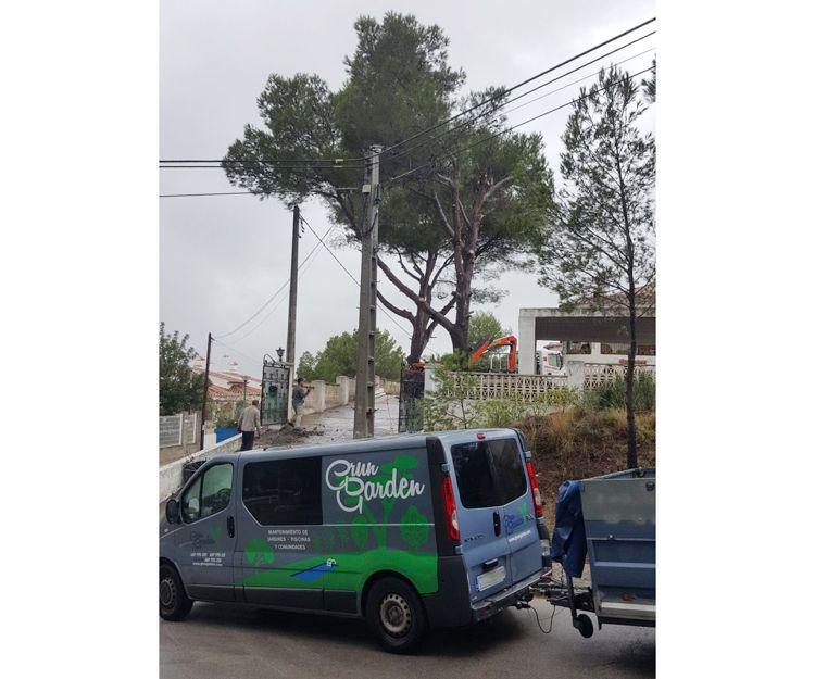 Poda de árboles en Oliva, Valencia