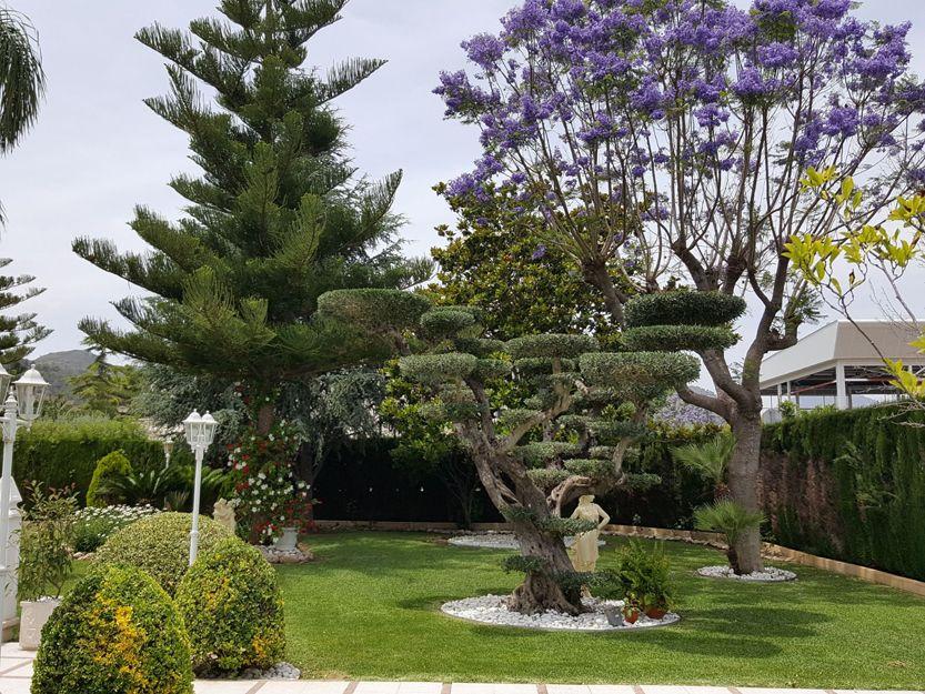 Diseño de jardines en Gandía