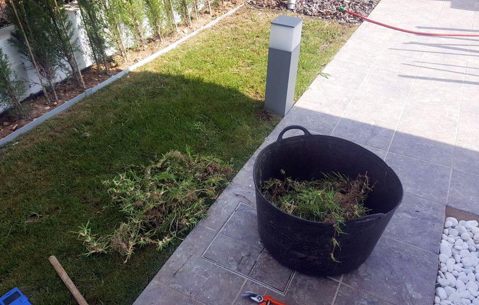 Foto 104 de Jardinería en Daimús | Grun Garden