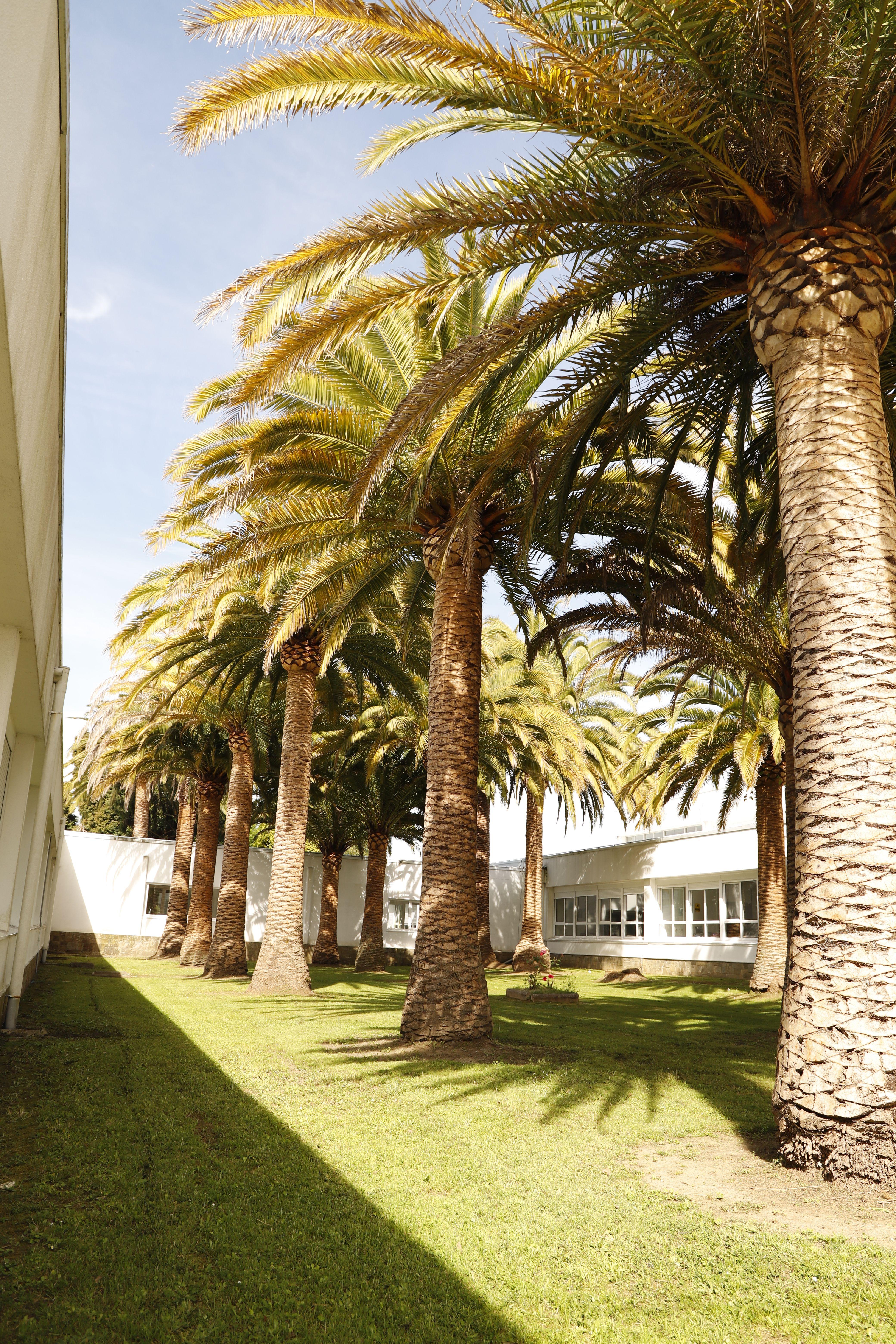 Servicio de jardinería en A Coruña