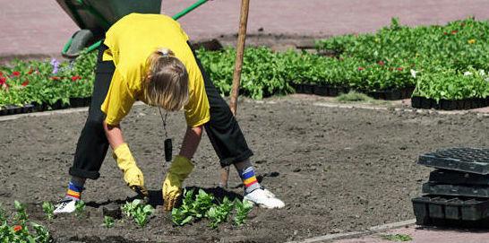 Mantenimiento de fincas y jardines