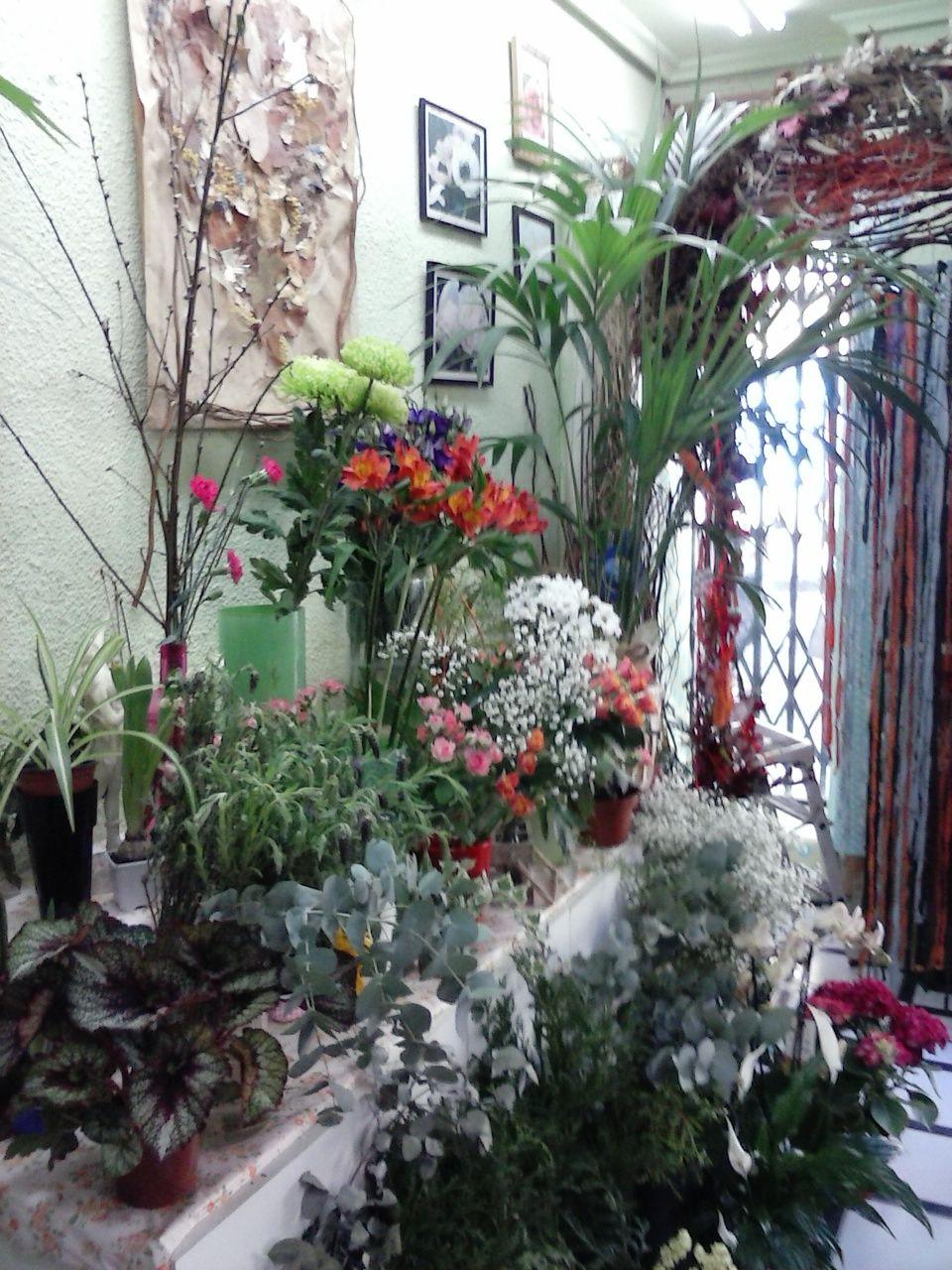 Plantas de exterior, de decoración...