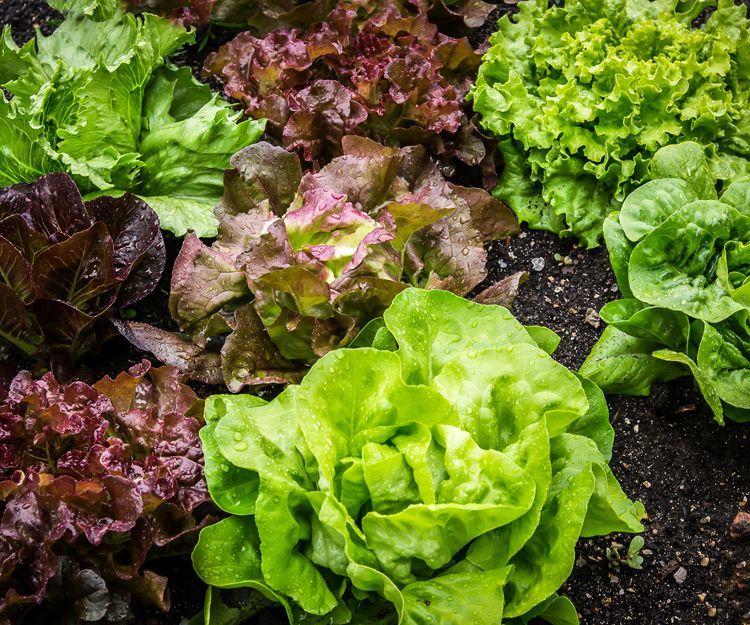 Verduras baby: Servicios de Coygasa