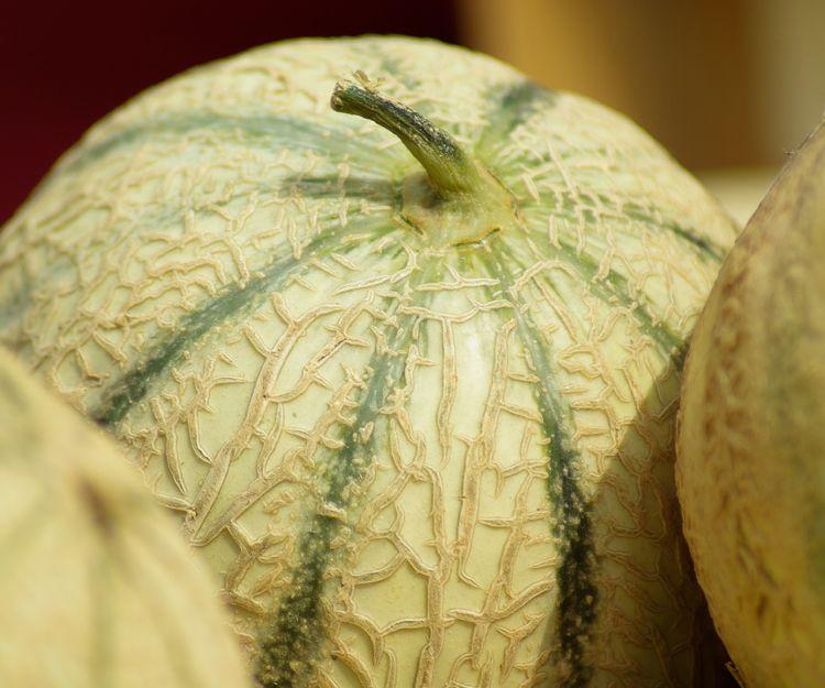 Empresa de cultivo y distribución de melón francés Charentais en Málaga