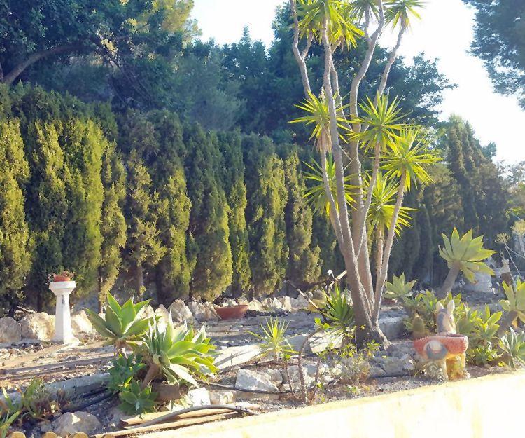 Diseño y mantenimiento de jardines en Granada